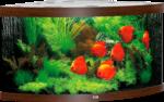 Juwel Aquarium »Trigon 350« dunkelbraun
