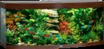 Juwel Aquarium »Vision 450« dunkelbraun