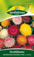 Quedlinburger Strohblume, Helichr. Rbl