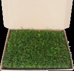Plantiflor Rollrasen »Sport & Spiel« Musterstück