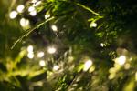 LED-Lichterkette Snakelight Länge 14 m, 700 warmweiße LED's