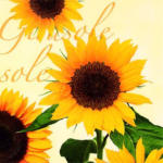 Diverse Hersteller - Servietten Sonnenblumen cremefarben 33x33cm 20Stück