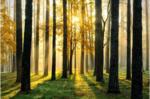 FototapeteSonniger Wald
