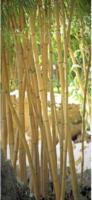 Türdecor Bambus