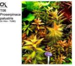 Aquaristik - OK Proserpinaca palustris (T06)