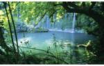 Fototapete Wald mit See