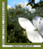 Gartenbau Mehlig Angebote